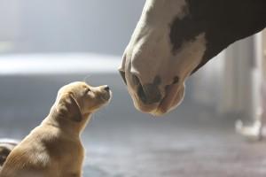 The top five 2014 Super Bowl commercials