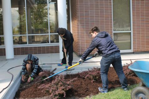 Juniors Davin Heilich, Josh Nodurft, and John Ellison work around JB mulching for service learning.
