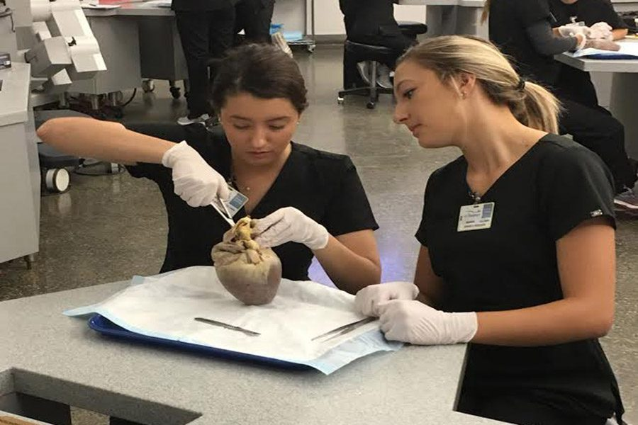 Mehlville student Iva Grbesa (12) and OHS student Jessica Roeger (12) perform a dissection of the heart.